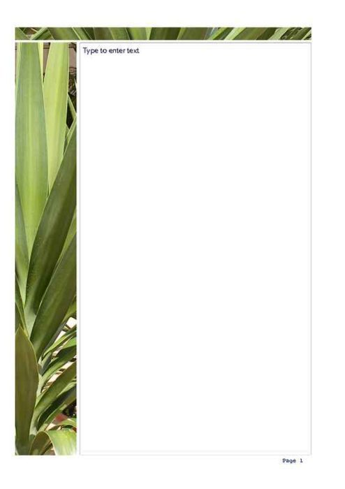 Aloe Vera Leaves Photo Stationery